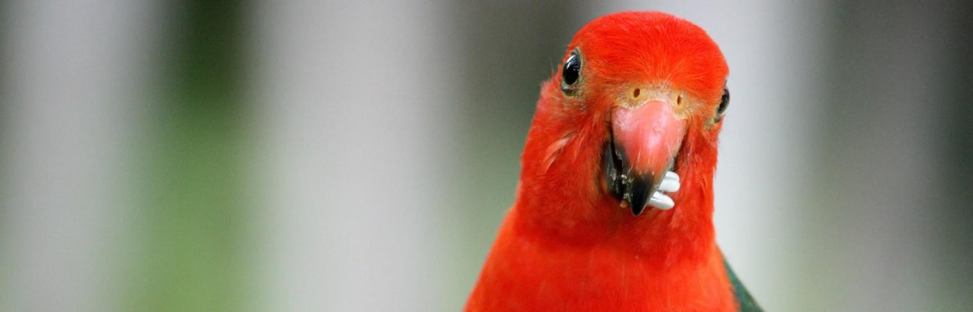 parrot-slider